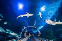 Aquarium of the Bay General Admission